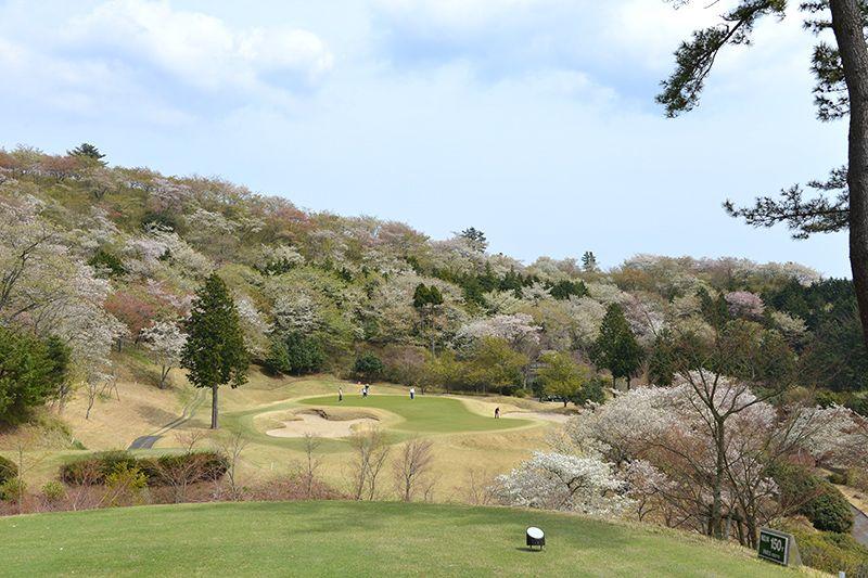 14番ホール扇山の桜